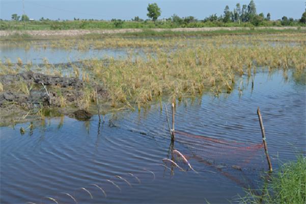 Cà Mau công bố thiên tai cấp độ 2 đối với nuôi trồng thủy sản - http://www.daikynguyenvn.com/viet-nam/ca-mau-cong-bo-thien-tai-cap-do-2-doi-voi-nuoi-trong-thuy-san.html