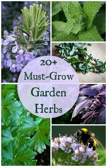 Must Grow Kitchen Garden Herb Plants The Ultimate Growing Guide Index Planting Herbs Plants Herb Garden