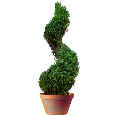 I pinned this Preserved Juniper Topiary II from the English Accents event at Joss and Main!