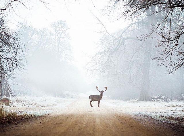 A Stunning December Morning In The Deer Park North Of Copenhagen