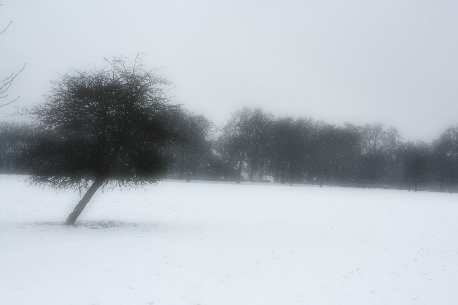 Lone tree in the snow on Finsbury Park  via  An Urban Village