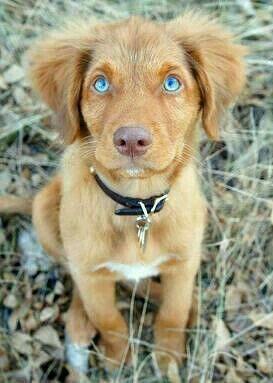 Perro Hermoso Con Ojos Calipso Cute Puppy Names Puppies Retriever Puppy