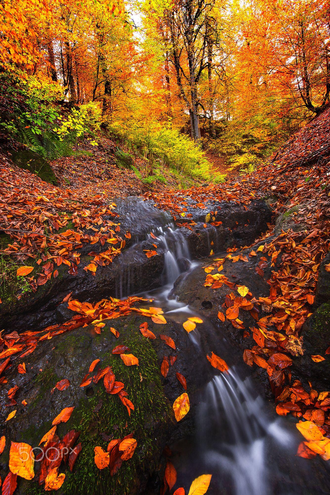 Autumn Dream Follow Me In Instagram Https Www Instagram Com Saeedyounesi Autumn Landscape Autumn Scenery Landscape