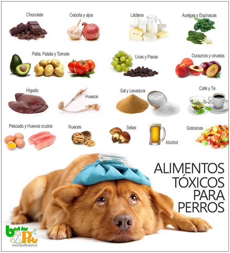 17 Alimentos Nocivos Para La Salud De Los Perros Con Imagenes