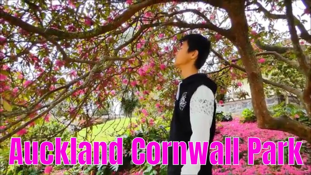 A Tree With The Pink Flowers Auckland Cornwall Park Pink Flowers Auckland Flowers