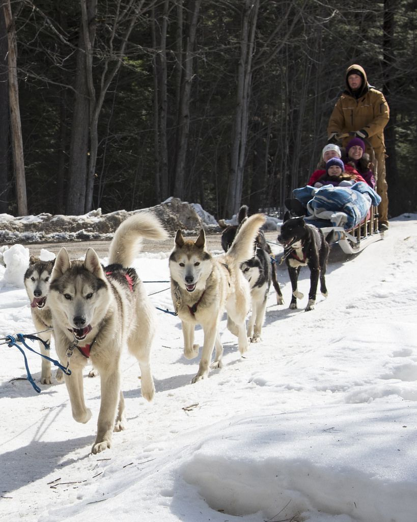 Buying Guide For Strollers For Old Dogs Canadian eskimo