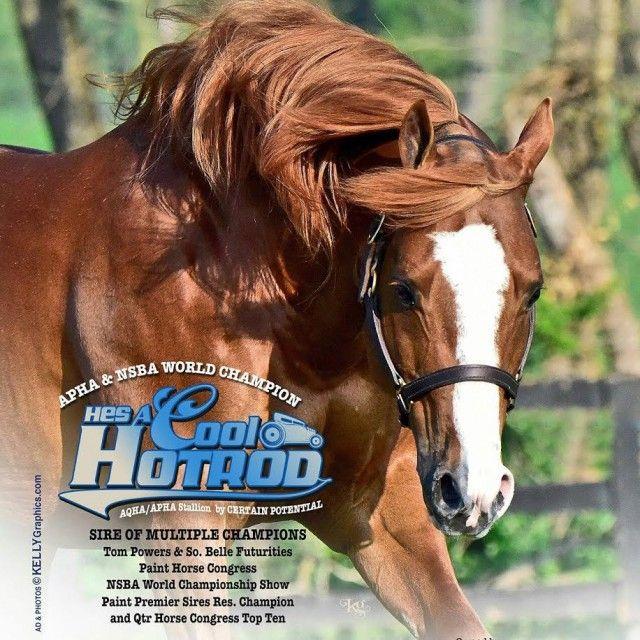 Hes A Cool Hotrod ist ein ein 2004 geborener AQHA/APHA doppelt registrierter Sorrel Overo Hengst.
