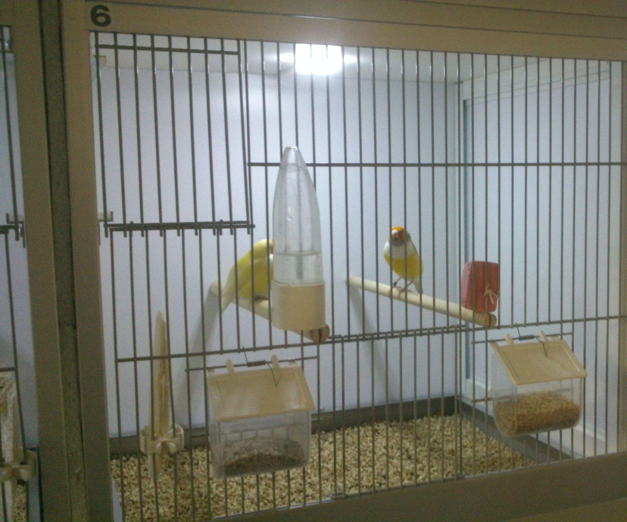 Bird Cage Led Daylight Simulation System Bird House Kits