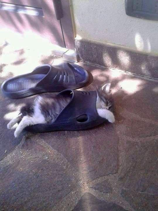 Photo of Her Yerde Her Türlü Şartta Uyuyabilen 15 Sevimli Kedi – FarklıFarklı