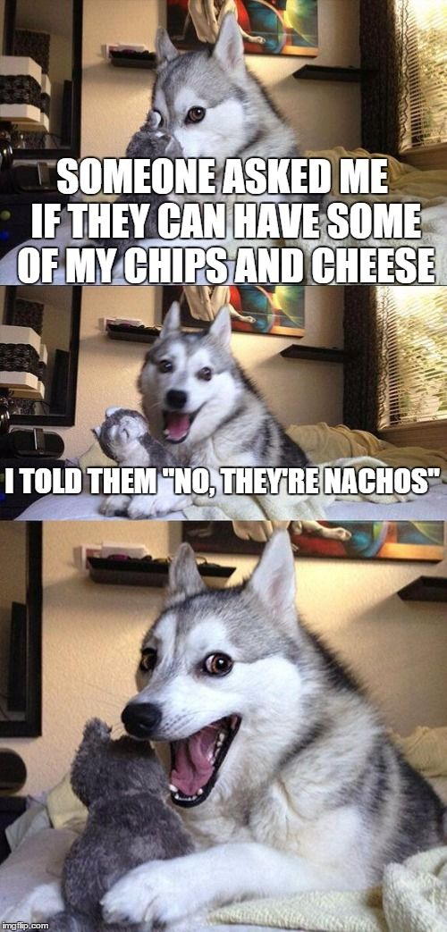 Cheesy Pun Dog Cheesy Puns Pun Dog And Dog - 17 memes youd definitely send your dog if you could