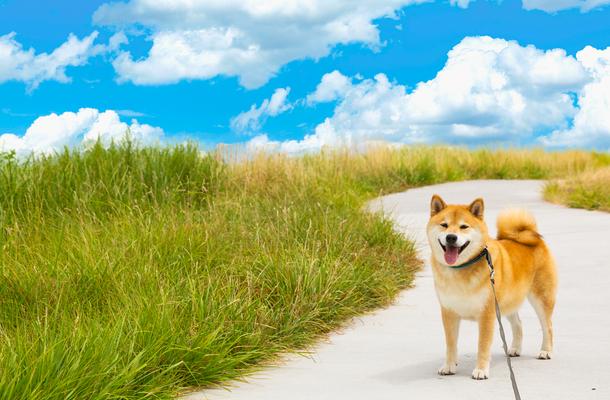 海 山が魅力の伊豆高原 実は 犬にとっても楽園だった 柴犬まるの実体験リポート付 柴犬 柴犬まる 犬
