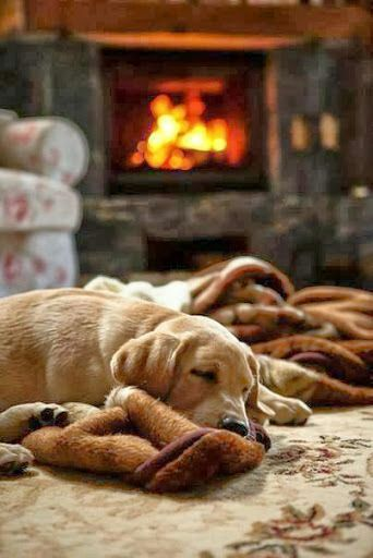 warm puppy sleeping by the fireplace | Adorbs | Pinterest | Autumn ...