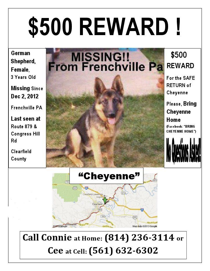 500 Reward For Cheyenne S Safe Return No Questions Asked