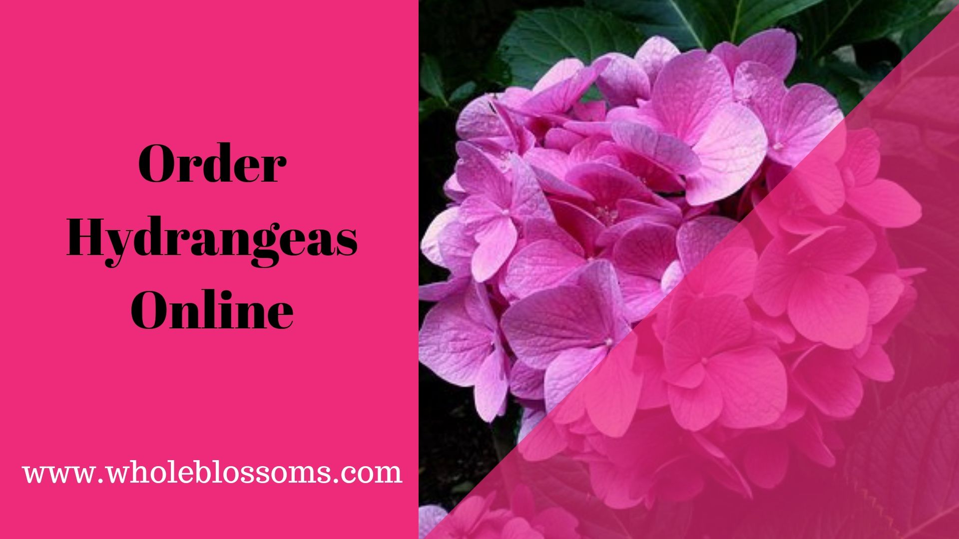 Ordering Best And Affordable Hydrangeas Online Flowers For Sale Fresh Flower Delivery Flower Delivery