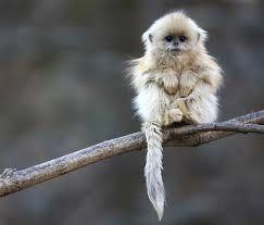 baby.monkey.