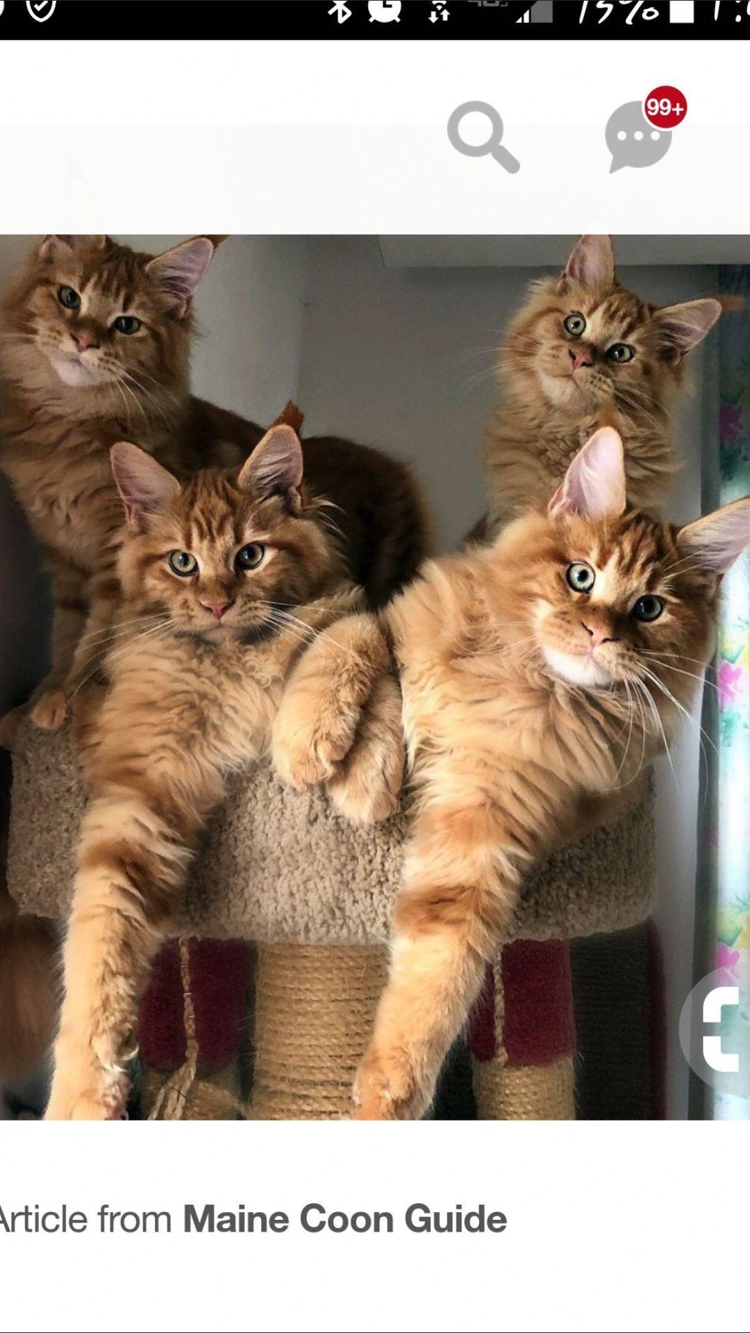Pin On Orange Kitties