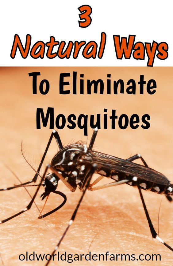 Battling Mosquitoes - 3 Great Ways To Protect Your ...