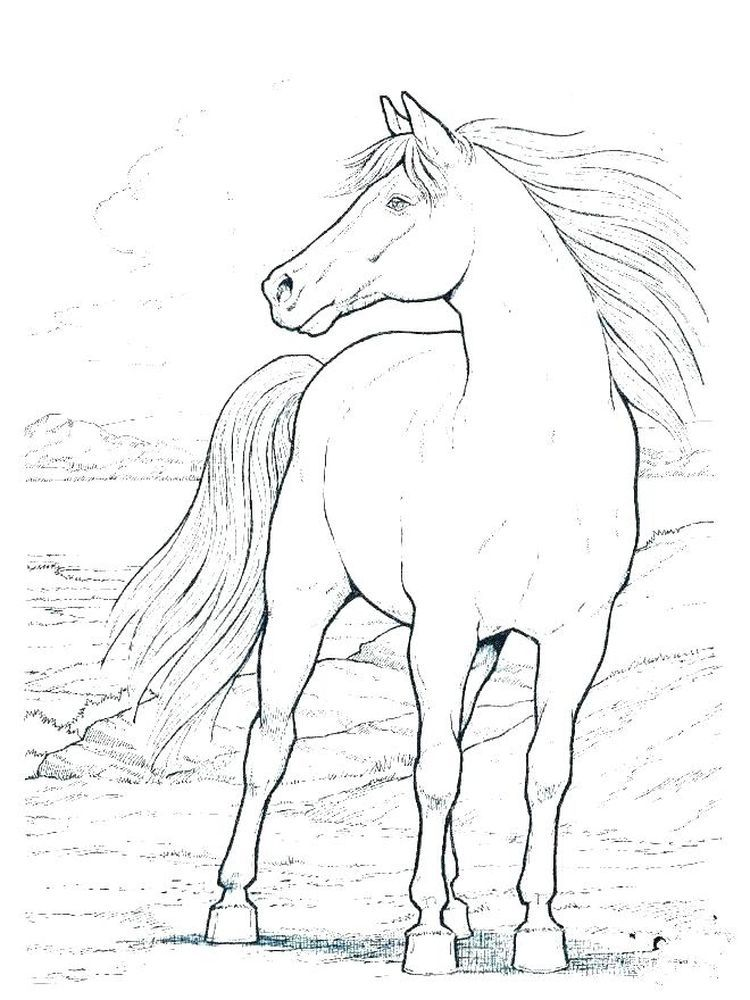 Free Wild Horse Coloring Pages Horses Are Known As Runner Animals So They Are Often Used As Fa Dover Coloring Pages Horse Coloring Pages Horse Coloring Books