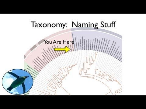 Taxonomy And Systematics Youtube Science Pinterest