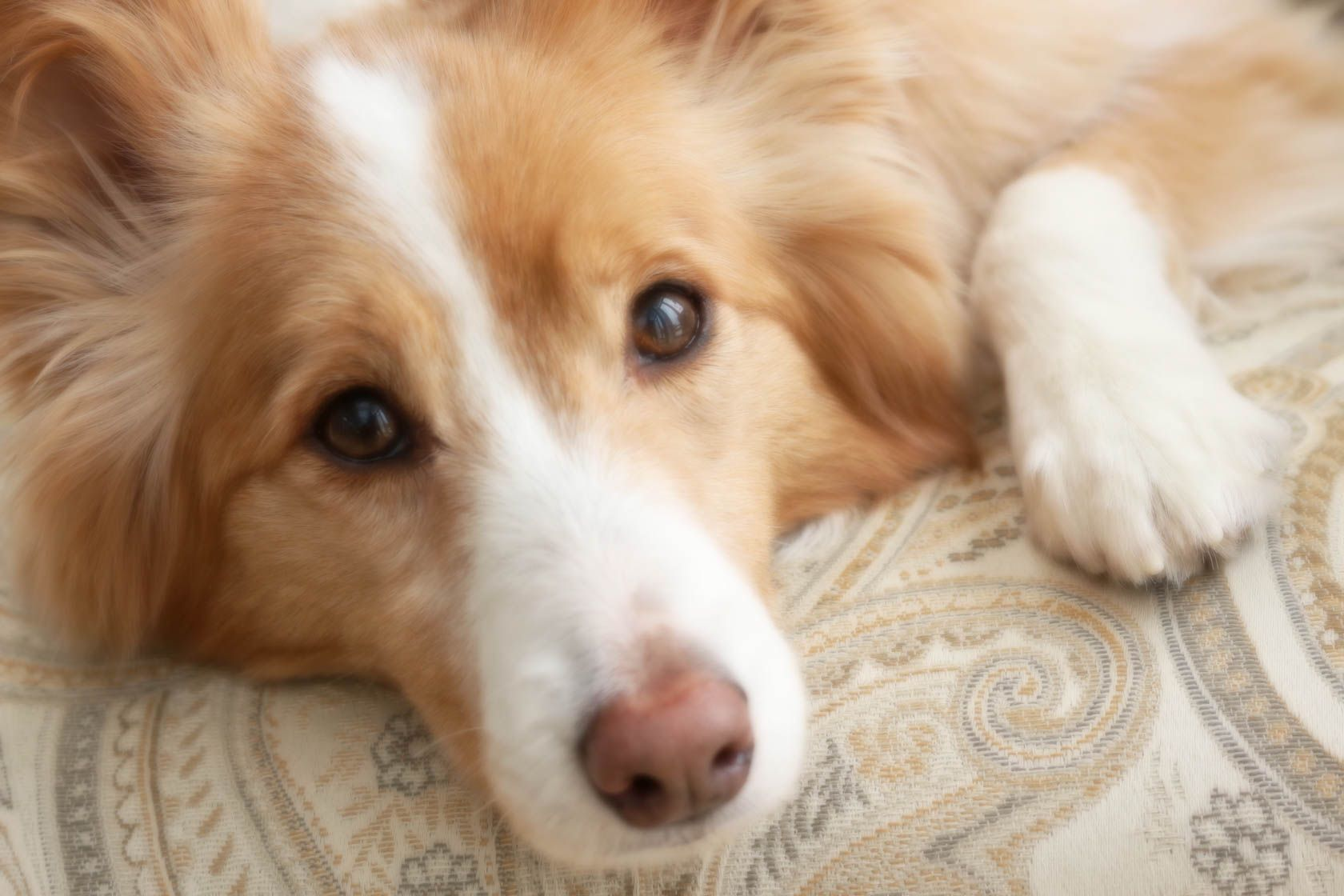 Dog Close Up Taken With Canon Eos 700d Dslr Camera Best Price And