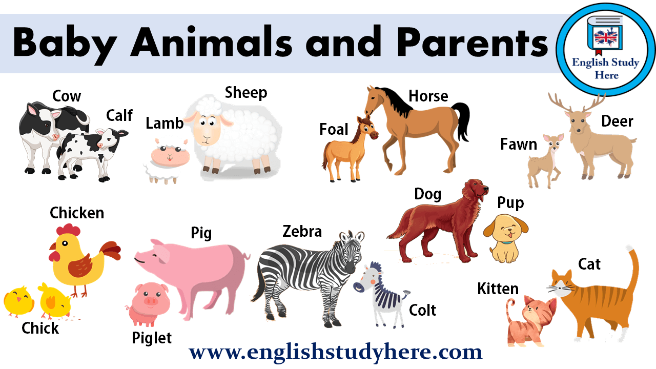 Baby Animals and Parents Baby animal names, Baby animals
