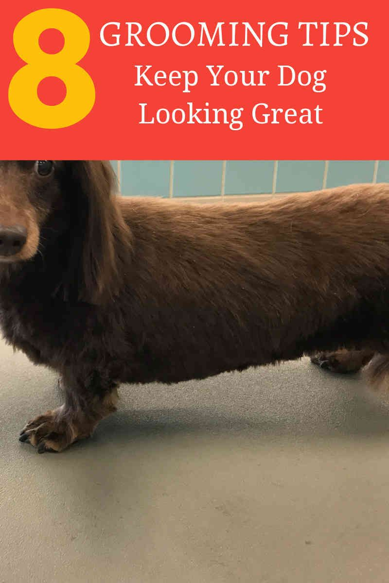 Dog Grooming Dealing With Your Dog S Hair Mats At Home Dog