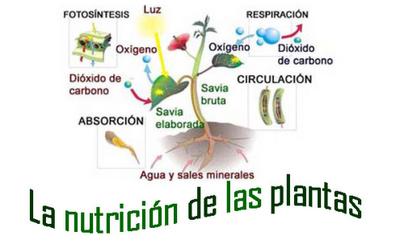 Nutricion De Las Plantas Plantas Cuidado De Plantas Fotosintesis