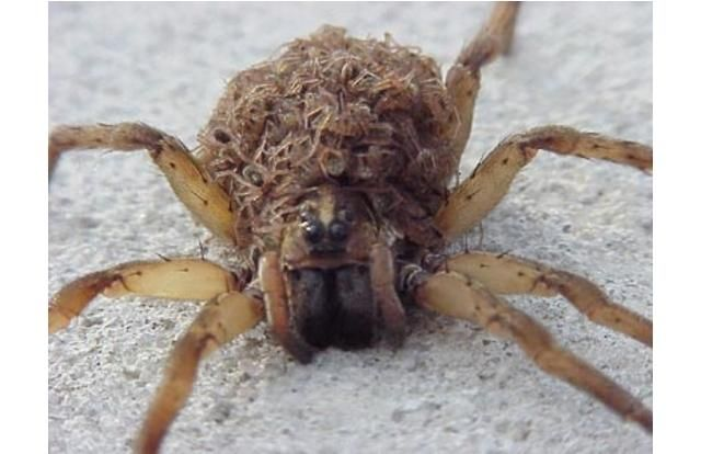The 42 Strangest Animals Ever That You CANNOT Stop Looking At