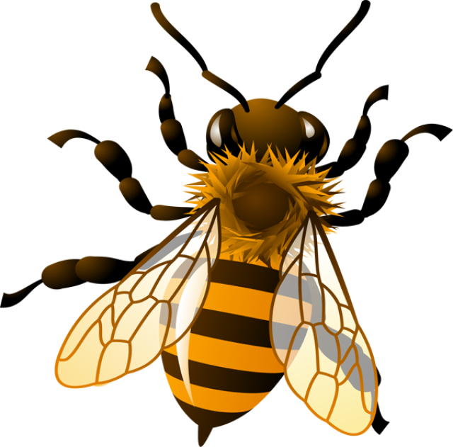 honey bee clipart clipart kid bees pinterest bee clipart rh pinterest com honey bee clip art images free honey bee clipart black and white