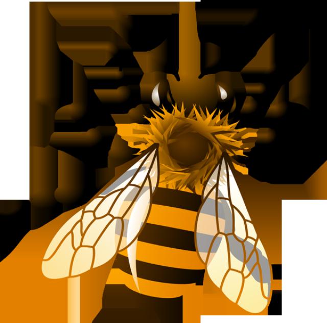 honey bee clipart clipart kid bees pinterest bee