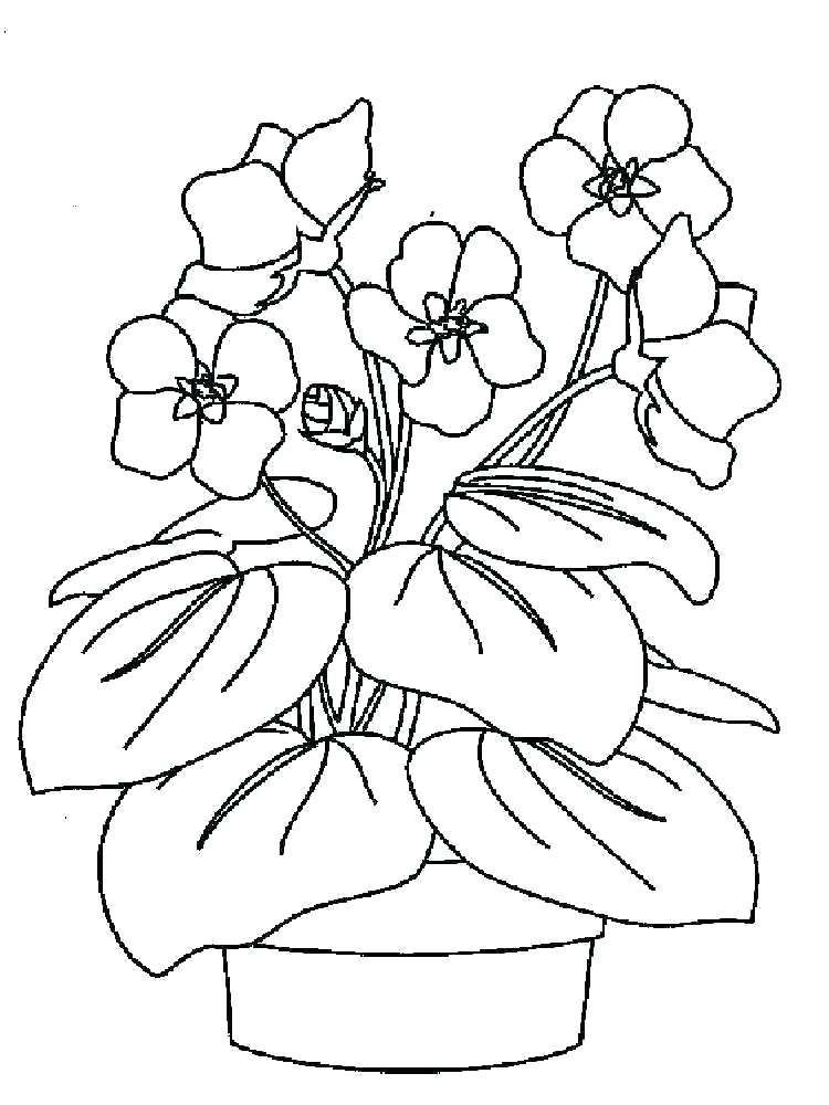 Violet Flower Coloring Page Youngandtae Com In 2020 Flower Coloring Pages Pattern Coloring Pages Free Printable Coloring Pages
