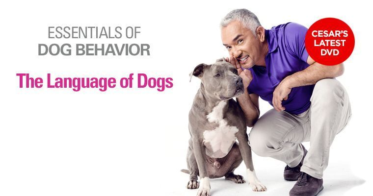 Cesar S Way Dog Training Dvds Books Articles And Video