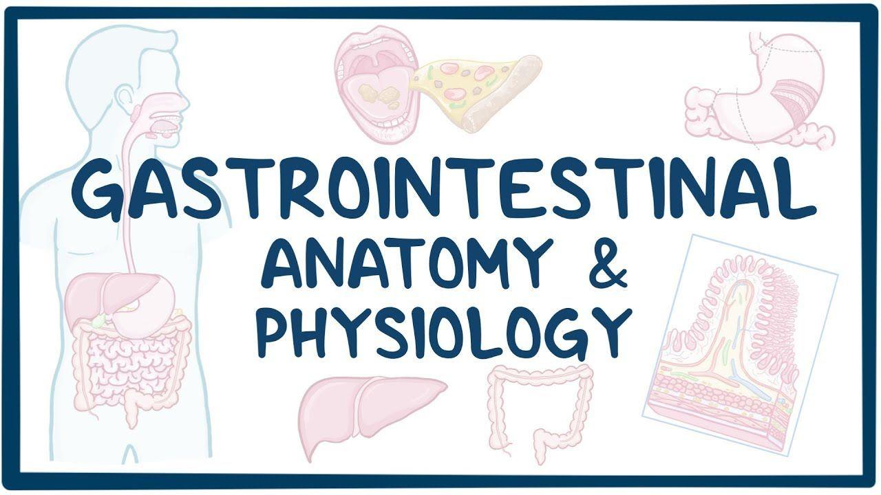 12+ Gastrointestinal Anatomy and Physiology