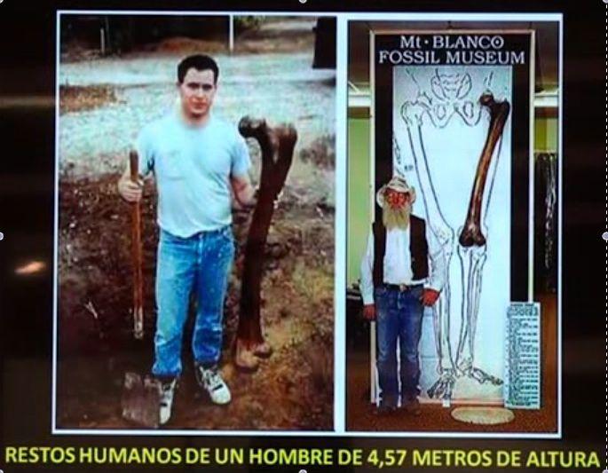Restos humanos de un hombre de 4,57m de altura conservados en el museo de fósiles de Monte Blanco, Texas.