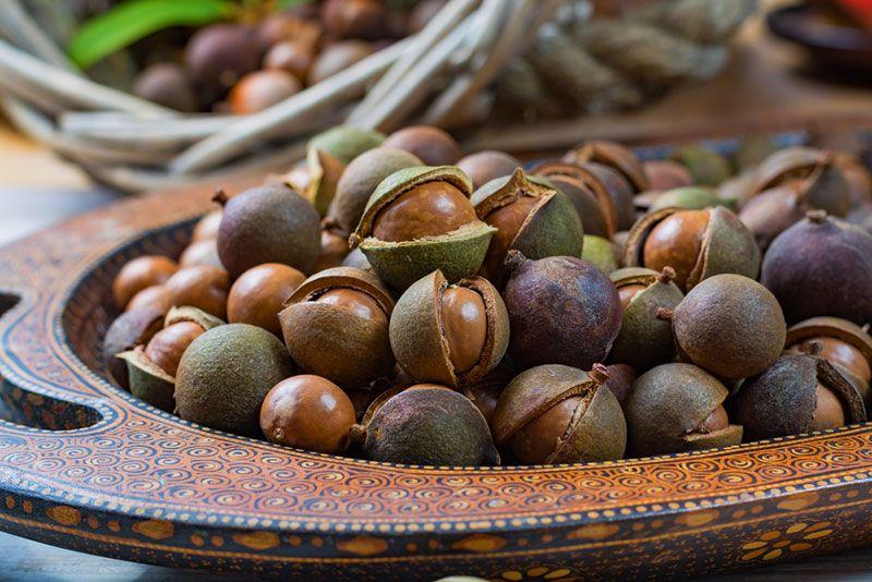 Best 8 Benefits Of Macadamia Nuts Medicinal Foods Macadamia Nuts Food Medicine Macadamia