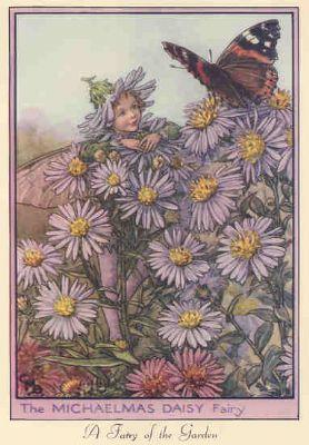 Flower Fairies Michaelmas Daisy Dogwood Color Prints Flower Fairies Colorful Prints Prints
