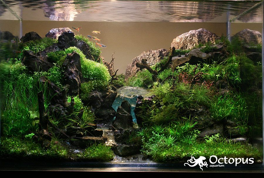 Aquascaping by octopus aquarium via for Octopus fish tank
