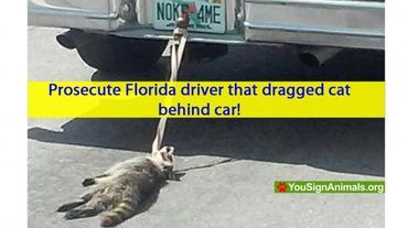 Prosecute Florida Driver That Dragged Cat Behind Car Care2 News