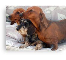 Three Dachshund Puppies Playing Lienzo Dachshund Puppies