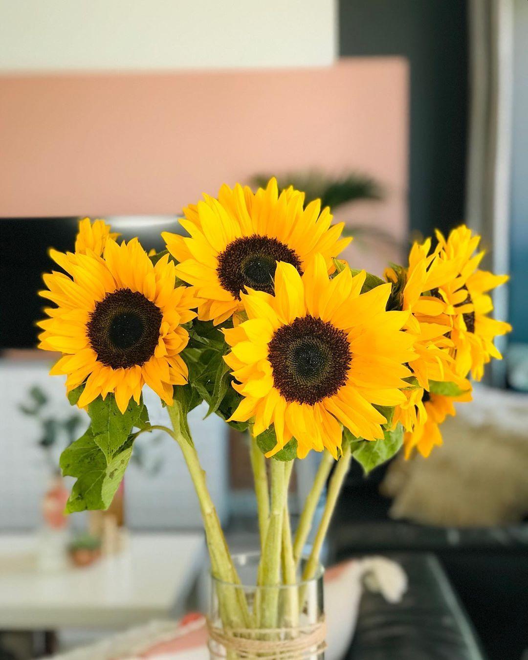 Well hello sunshine ☀️ 🌻☺️ #sunflowers🌻 #flowers  #pimpupmypad #interiors123 #yourlayeredhome #howirent #interior123 #homestyling #uk #london #homedecor