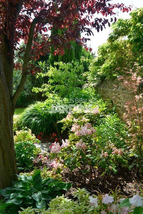 Massif de plante de terre de bruyère : Rhododendron, Pieris, Hosta ...