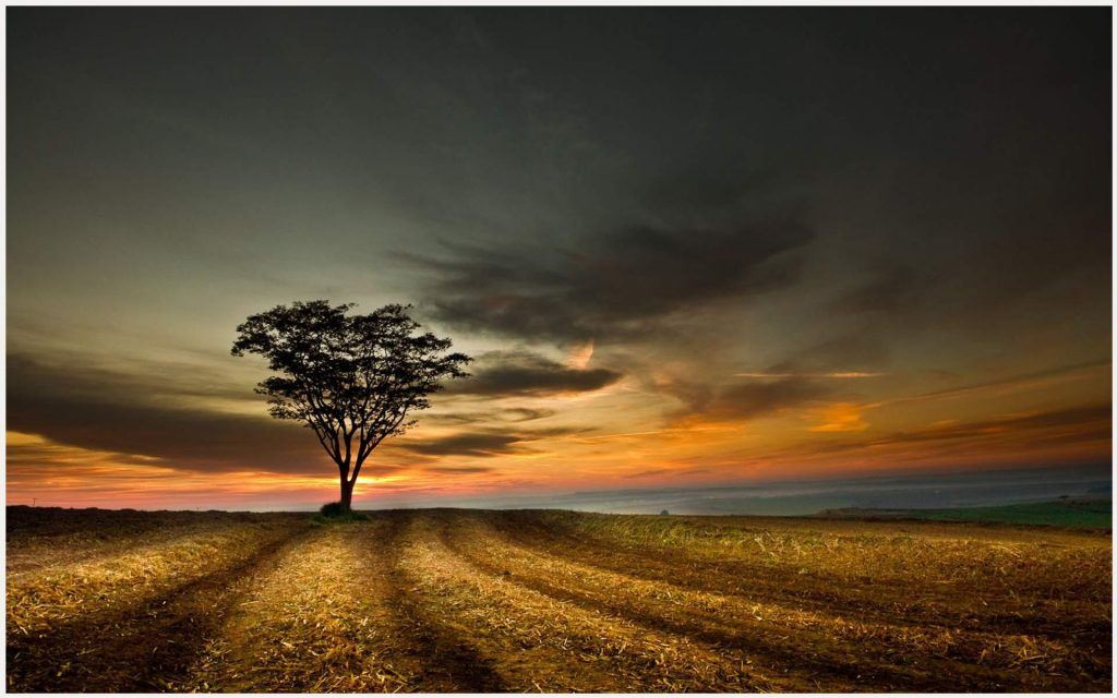 Tree HD Wallpapers Background Images Wallpaper