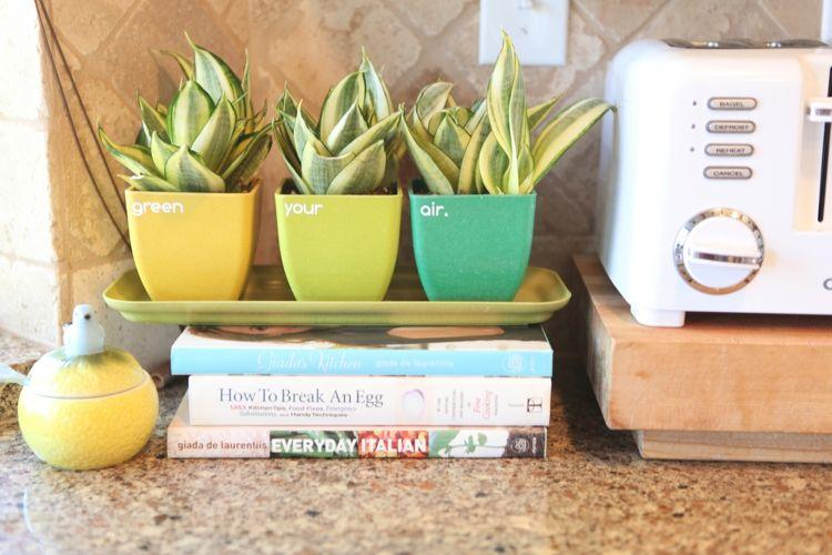 pflanzen in der kuche tipps rund pflege, pflanzen in der küche – tipps rund um die pflege | küche | pinterest, Design ideen