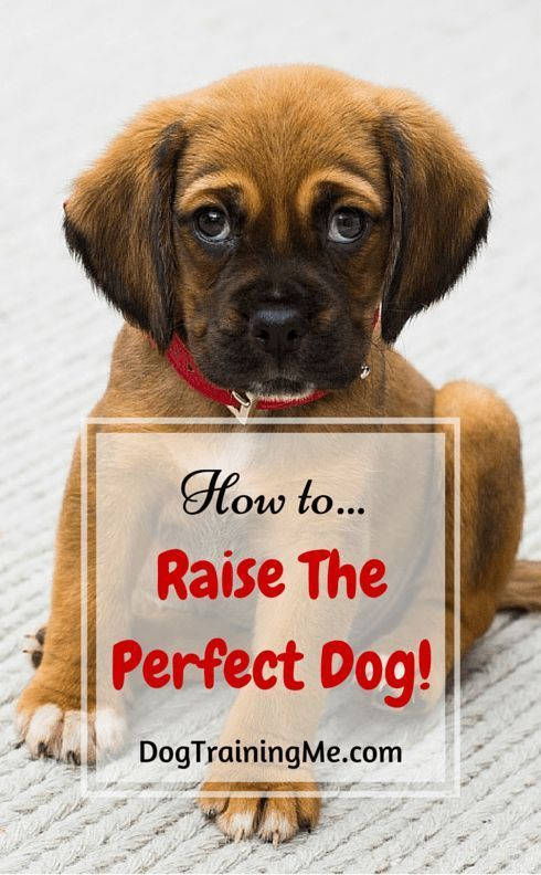 How To Raise The Perfect Dog The Perfect Dog Dog Training