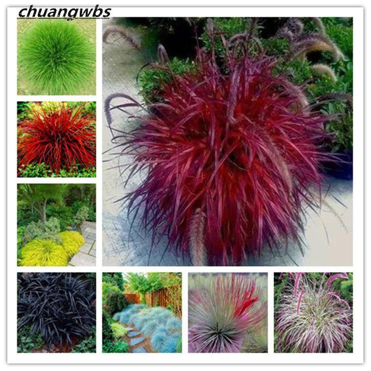 100 Mix Fescue Grassamen Festuca Glauca Mehrjahrig Winterhartes Ziergras S Ziergras Wachsenden Pflanzen Pflanzen