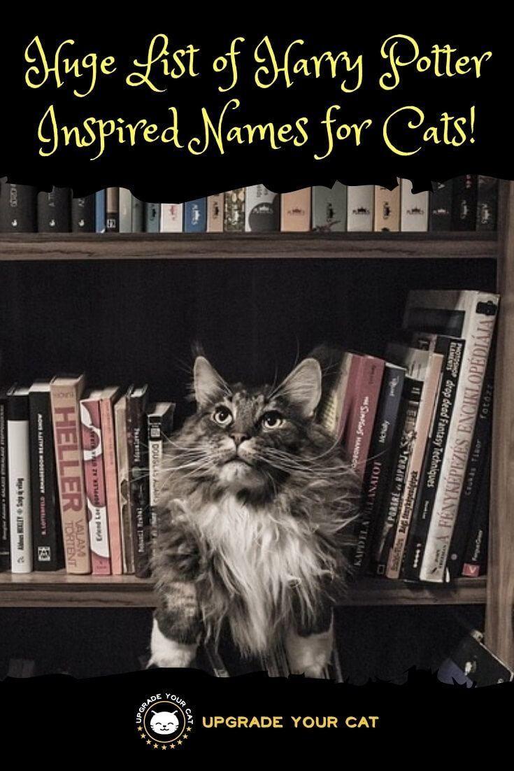 100+ Magical Harry Potter Cat Names Картинки