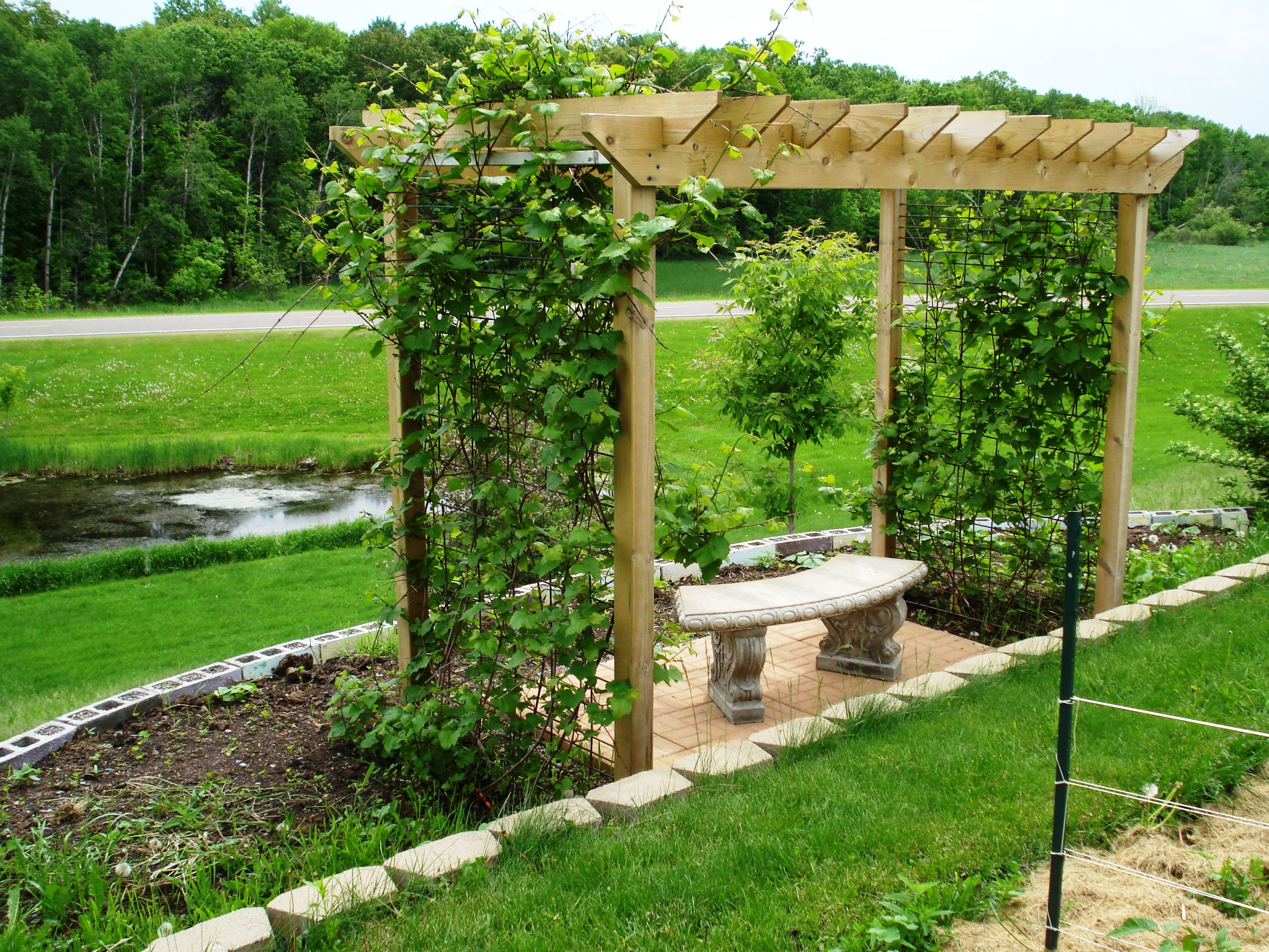 The Grape Arbor my honey built for our yard with the