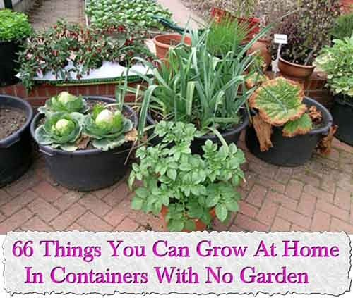 66 Things You Can Grow At Home In Containers With No Garden