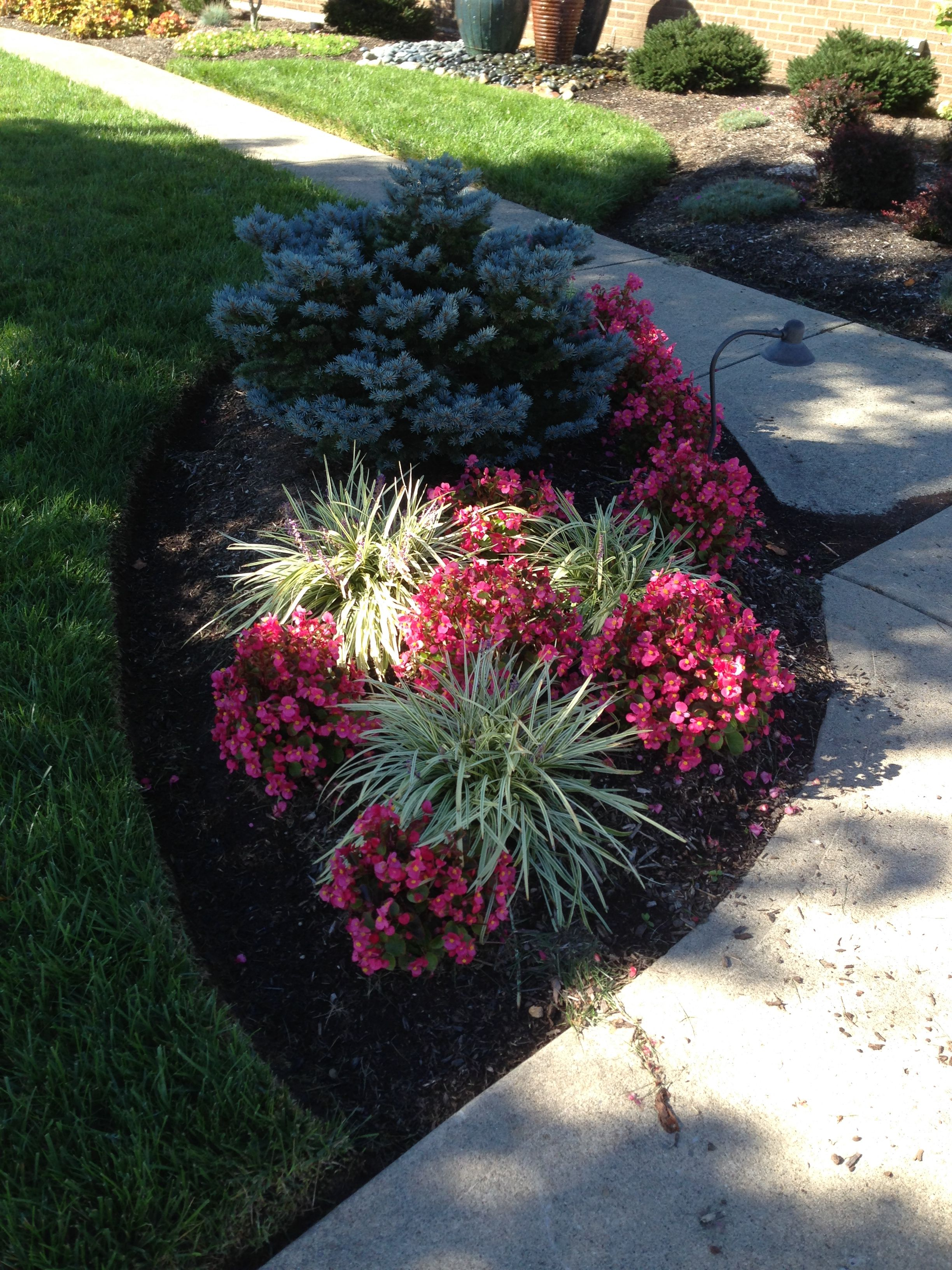 Pink wax begonias annuals in landscape annuals for Wax landscape