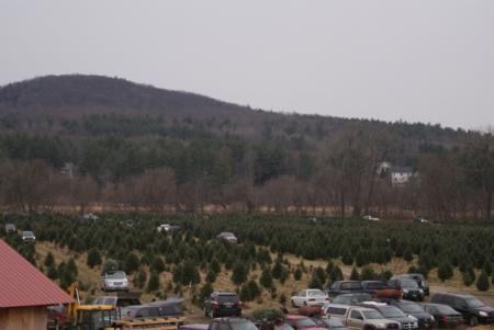 Whites Christmas Tree Farm Essex Vt Essex Vt Christmas Tree Farm White Christmas Tree Tree Farms